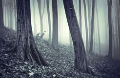 Rain dripping in a forest with fog Stock Photos