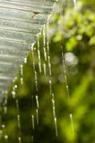 Rain Dripping from Roof. Rain dripping from patio roof edge. Shallow DOF Stock Photos