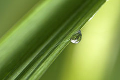 Rain drop. On a blade of grass Royalty Free Stock Photo