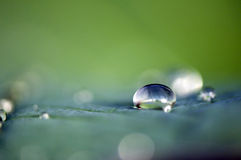 Rain drop. On a leaf stock photos