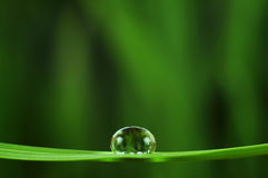 Rain drop Stock Images