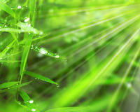 Raindrops. On green grass Stock Images