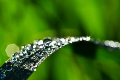 Rain Drop and bokeh Royalty Free Stock Image
