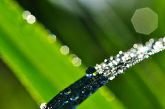 Rain Drop and bokeh Stock Photo