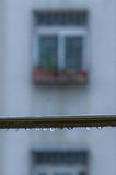 Rain Drop. On branch with a window in the background Royalty Free Stock Photography