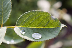 Rain drop Royalty Free Stock Image