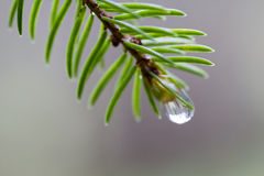 Rain drop at the end of branch Stock Photos