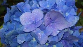 Rain drop. Flowers on a rainy day Royalty Free Stock Photos
