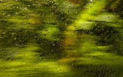 Rain drop on the glass blending. With background green nature royalty free stock images