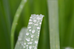 Rain drop on grass leaf Stock Image