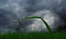 Rain drop grasses. Trickling down to the grass in the rain Stock Image