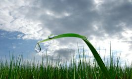 Rain drop grasses. After the rain dripping from the stem Royalty Free Stock Photography