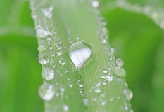 Rain drop on green blade Stock Images