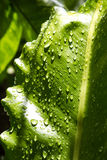 Rain drop on green leaf Stock Photography