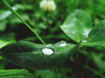 Rain drop. Green leaf, rain, day Royalty Free Stock Photo
