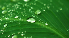 Rain drop on green leaf. Exotic garden after rain. Wet season in tropics. Stock Image