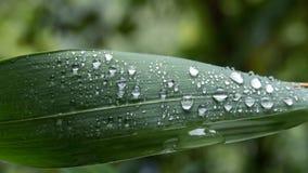 rain drop on green leaf Royalty Free Stock Photos