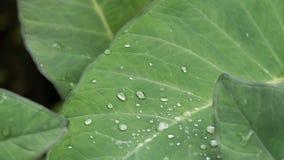 rain drop on green leaf Royalty Free Stock Photography