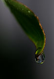 Rain Drop on a Leaf Royalty Free Stock Photos