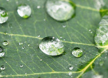 Rain drop on a leaf Stock Photography
