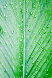 Rain drop on leaf Royalty Free Stock Photography