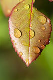 Rain drop on leaf Stock Photos