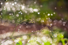 Rain drop in nature Royalty Free Stock Photography