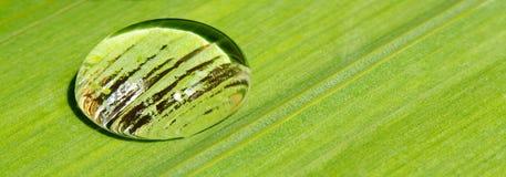 Free Rain Drop On Leaf Background Royalty Free Stock Photo - 31940075