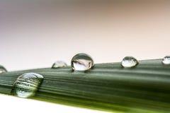 Rain drop. Rani drop on green background Stock Image
