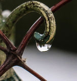 Rain Drop. Reflecting the trees in the background Royalty Free Stock Photo