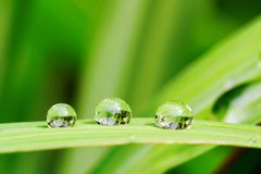 Rain drop. Reflections in rain drop on lemongrass leaf Royalty Free Stock Photography