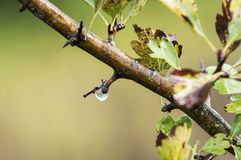 Rain drop. Size and shape of a rain drop Stock Images