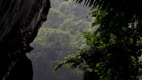 Rain drop at tropical rain forest. Rain drop at tropical rain forest, view from the cave, nature backgrounds. concept zoom in stock footage