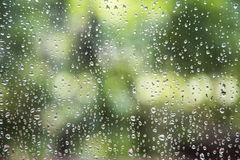 Rain drop on window glass with blur tree background. Stock Images