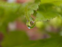 Rain droplet hanging from a leaf Royalty Free Stock Photos