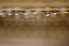 Rain Droplets Stock Images