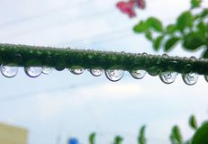 Rain Droplets. Beautiful afte rain view Royalty Free Stock Photo