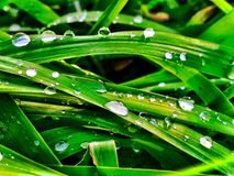 Rain droplets on blades of grass. Macro shot of Rain droplets on blades of grass Royalty Free Stock Image