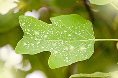 Rain droplets on leaf. Stock Photo