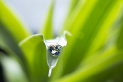 Rain droplets on a leaf reflecting earth concept for environmental conservation Royalty Free Stock Photography