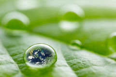 Rain droplets on a leaf reflecting earth concept for environmental conservation Stock Photography