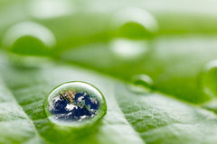Rain droplets on a leaf reflecting earth concept for environmental conservation Stock Photo