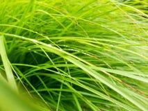 Rain droplets on long grass stock image