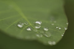 Rain droplets Stock Photo