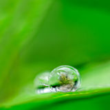 Rain droppe Royaltyfria Bilder