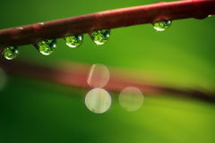 Rain drops-04 Royalty Free Stock Photography