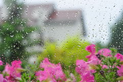 Rain drops. On window against garden Royalty Free Stock Photography
