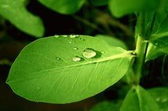 Rain drops Stock Image