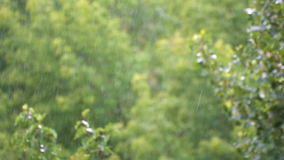 Rain drops on a background of green leaves in the summer park.  stock footage