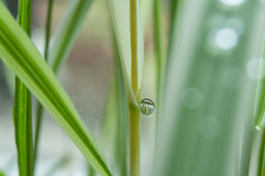 Rain drops on bamboo leaves Stock Photos